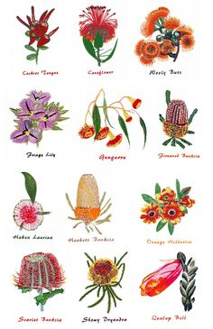 Unique and high quality Australian Floral embroidery designs at Outback Embroidery located at Embroidery Passbook Mall Australian Wildflowers, Australian Native Flowers, Australian Plants, Australian Garden Design, Australian Native Garden, Australian Tattoo, Australian Art, Botanical Drawings, Botanical Art