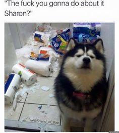 Pissed off dog - http://jokideo.com/pissed-off-dog-2/