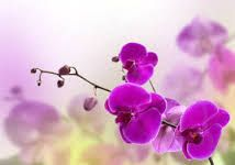 Resultado de imagen para orquideas azules