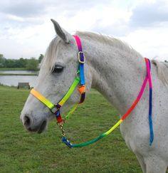 rainbow-coloured headcollar and lead rope