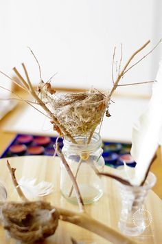 Bird Nest Provocation An Everyday Story Feathers and Nests: An Observational Art Provocation