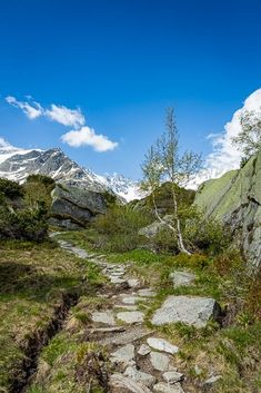 Steilwand Andermatt, Flora, Berg, Kanton, Mountains, Nature, Travel, Hiking, Switzerland