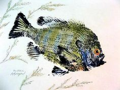 FRESH WATER GYOTAKU GALLERY - GYOTAKU Fish Rubbings - Art by Barry ...
