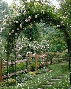 Rosenbue med slyngroser