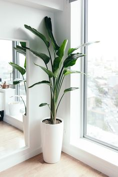 work from home space - birds of paradise plant