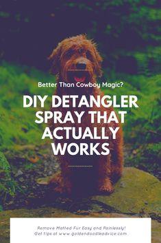 Better than Cowboy Magic? This DIY Detangler Spray is AMAZING! DIY Detangler spray formula for dogs goldendoodles cowboy magic Goldendoodle Haircuts, Goldendoodle Grooming, Pet Grooming, Goldendoodle Training, Yorkie, Matted Dog Hair, Diy Hair Detangler, Poodle Hair, Dog Care Tips