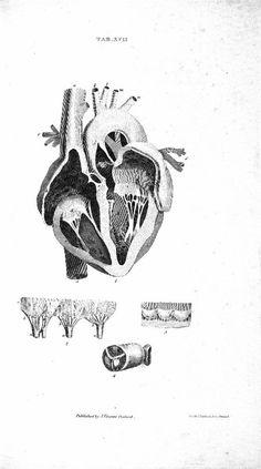 Vintage medical illustration.