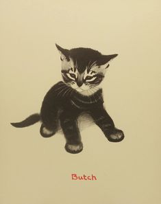 Vintage Butch the Kitten, by Clare Turlay Newberry (1940)