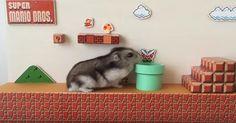 Super Mario Bros s'offre un nouveau personnage: un hamster - http://www.jeuxvideo.org/2016/09/super-mario-bros-soffre-un-nouveau-personnage-un-hamster/