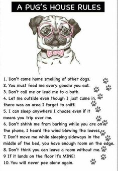 Explore our site for more information on pug. It is actually an outstanding loca… Explore our site for more information on pug. It is actually an outstanding location for more information. Cute Pugs, Cute Funny Animals, Funny Dogs, Pug Quotes, Black Pug Puppies, Pug Wallpaper, Pugs And Kisses, Baby Pugs, Pug Art
