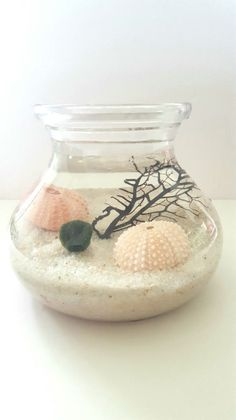 Marimo Moss Ball Aqua Terrarium di RootBotanical su Etsy