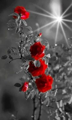 Glitter Photography, Splash Photography, Color Photography, Color Splash, Color Pop, Colour, Amazing Flowers, Beautiful Roses, Glitter Fotografie