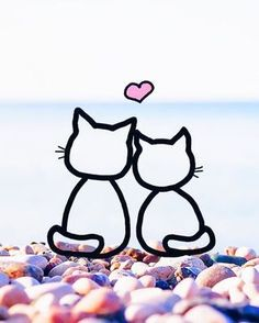 Cats Cool Wallpaper, Nice Wallpapers, Moon Child, Good Night, Galaxies, Minions, Snoopy, Dolls, Cats