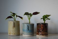 Atelier Stella. Little succulent pots.