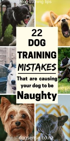 Dog training tips. Make sure that you do NOT make these mistakes when training your dog with basic commands! Ideas and hacks to help your dog training to go smoothly! Dog Training Methods, Training Your Puppy, Best Dog Breeds, Best Dogs, Human Food For Dogs, Easiest Dogs To Train, Dog Hacks, Happy Dogs, Dog Care