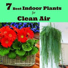 Best Air Cleaning Plants for Home Garden - The indoor air environment of your home or office may be filled with unwanted chemicals and elements that include