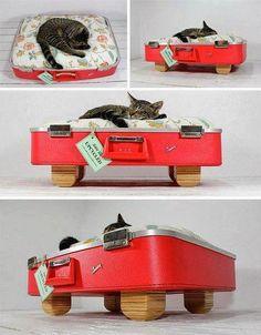 Dicas para gateiros: Mala velha = cama de gato