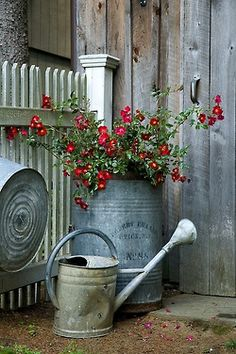 Old Tin Watering Can...Love the tin barrel and tub behind too!