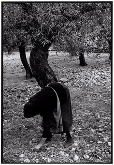 """by Constantine Manos, Gathering olives, Greece, Peloponnesus, 1964 """"A Greek Portfolio"""" Magnum Photos, Greece Photography, Street Photography, Old Pictures, Old Photos, Greece People, Photographer Portfolio, Famous Photographers, His Travel"""