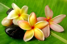 plumeria flowers | Gas from waste could heat almost half the homes in the UK