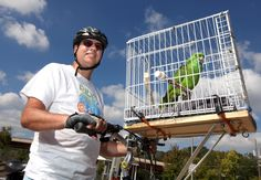 All this Parrot Has to say is Thanks for the Ride!