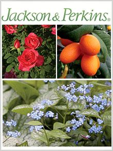 68 Free Seed and Plant Catalogs Seed catalogs Plant catalogs