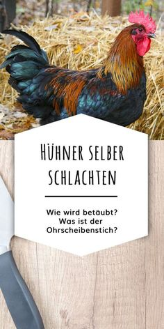 Hühner selber schlachten: Warum ist die Betäubung wichtig? Welche Utensilien brauchst Du? Wie geht der Ohrscheibenstich? Wie gelingt das Rupfen per Hand?
