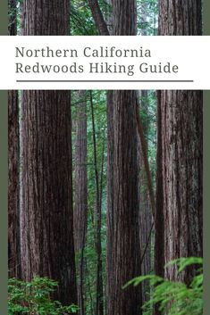 If you are visiting the coastal Half Moon Bay area this is a great half-day hike. Step into another world and walk among redwood giants. New Travel, Travel Usa, Family Travel, Canada Destinations, Hiking Guide, United States Travel, California Travel, Northern California, Bay Area