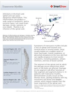 Transverse Myelitis (Spinal Cord Damage) General overview. Alissa diagnosed 8/6. Sacrum region