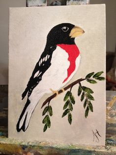 Mary's Red Breasted Grosbeak