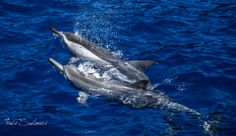 dolphins by Fadi Sahouri on 500px