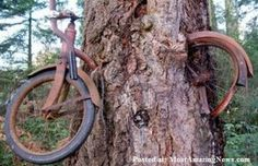 Hungry Trees Eat Bikes Rock Signboards and Bench - 1