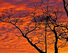 Fire in the Sky by Misty DawnS Photography