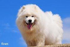 anjing yang lucu :D
