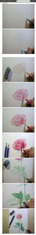 【绘画教程】玫瑰的彩铅教程