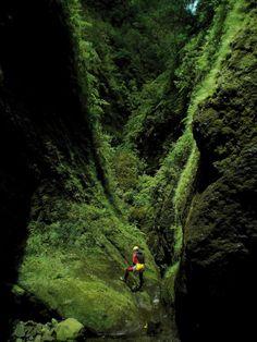 Madeira, o prazer de um abismo verde e azul