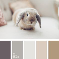 bunny tones | more on: http://www.pinterest.com/AnkAdesign/palettes/