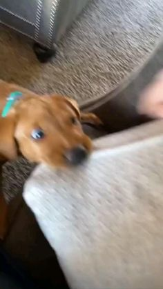 Cute Baby Dogs, Cute Funny Dogs, Cute Dogs And Puppies, Cute Funny Animals, Doggies, Funny Pets, Funny Animal Jokes, Funny Dog Memes, Funny Animal Videos