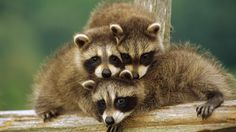 Image for best hd wallpaper gookep animalia image picture awesome amazing shoot photography