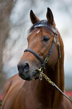 Darley's Teofilo, who like the great Frankel is sired by Galileo