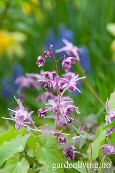 Garden Living: Stauder