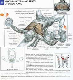 In our upper body, the largest muscle group is the pectoralis. The chest needs specific workouts for the inner pecs and upper and lower part. Your body looks good if you have a good looking chest. Fitness Workouts, Sport Fitness, Muscle Fitness, Mens Fitness, Fitness Tips, Fitness Motivation, Activ Fitness, Fitness Bodybuilding, Workout Plans