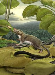 The ancestor of placental mammals which rose up out of the ashes of the dinosaur extinction. Wale, Extinct Animals, Rare Animals, Prehistoric Creatures, Fauna, Science And Nature, Mammals, Primates, Wildlife