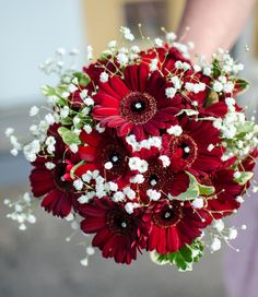 Compact Handtied Bouquet of gerbera and gypsophila.