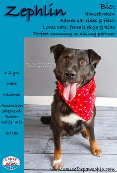 ADOPTED!!! Looking for a work out partner? Someone to help you get in shape? Someone to run with, roller blade with? Hit the hiking trails, return fly balls? At the end of the day a nice leisurely walk and some snuggle time? If so, Zephlin is your dog. Zephlin LOVES cats, kids & female dogs. Zephlin is a 1-2yr old, 60lb Border Collie & Australian Shepherd mix. He is a very happy, playful boy who would love a doggy playmate or active family & nice fenced in yard. causeforpawsohio.com