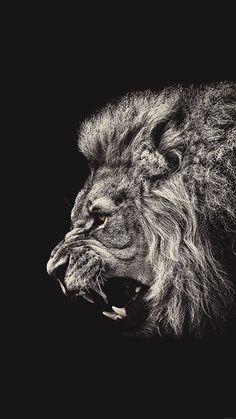 Art Discover View more male lion portrait iphone 6 plus hd wallpaper. Lion Wallpaper Iphone, Hd Wallpaper Android, Iphone 7 Wallpapers, Animal Wallpaper, Mobile Wallpaper, Wallpaper Backgrounds, Iphone Backgrounds, Desktop Wallpapers, Petit Tattoo