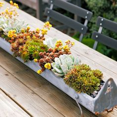 Tiny treasures - Cool Container Gardens - Sunset