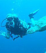 Diver, Fiji | Dive, travel and volunteer for Marine Conservation at www.frontiergap.com | #dive