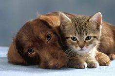"""Vor langer, langer, also wirklich ganz langer Zeit, da wohnten einmal ein Hund und eine Katze freundschaftlich nebeneinander. Nun begab es sich aber eines Tages, dass die beiden vor die Gottheit, die für ihr Dorf zuständig war, gerufen wurden. Und der Himmlische sprach zu ihnen: """"Seht ihr weit hinte"""