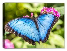 Blue Butterfly - Fine Art Canvas